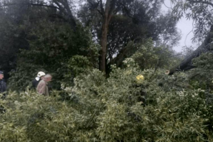 Машини не могли проїхати: на Волині негода повалила дерево (Фото)