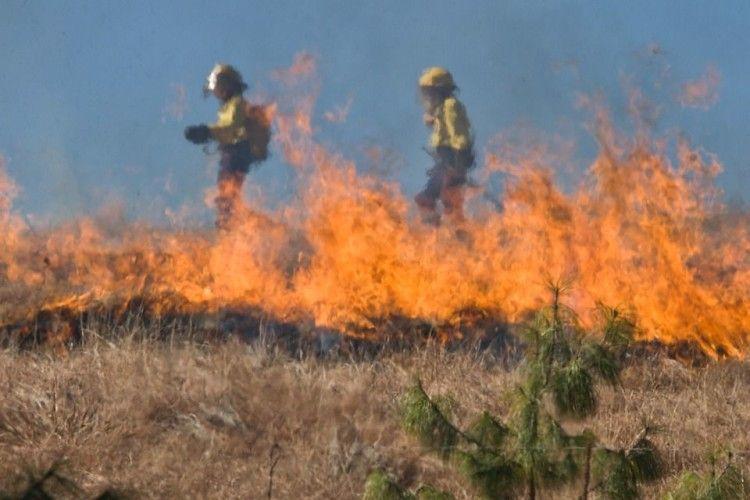 Волинянин спалював траву, а згоріло понад гектар лісу