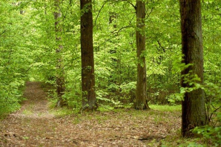 Краса лісу в об'єктиві старовижівського фотографа