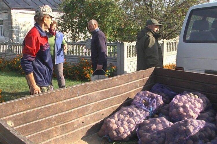 Картоплю почали збирати з дев'ятої ранку: як волинська громада дбала про «другий хліб» для пацієнтів медзакладів (Фото, відео)