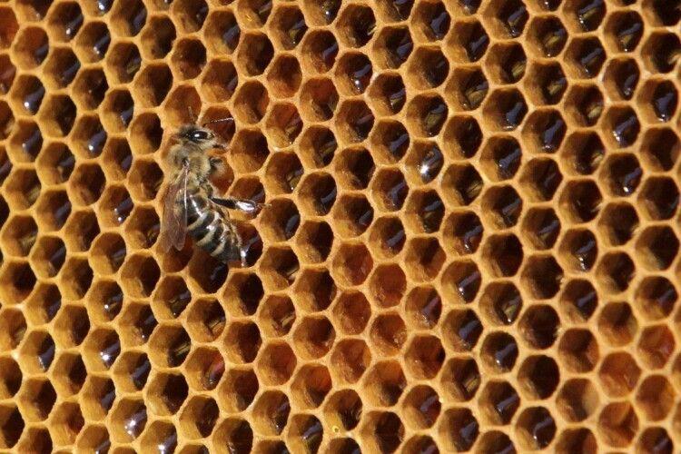 Українським бджолярам виплатили 240 мільйонів гривень дотацій