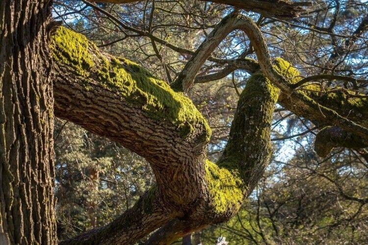 Хворий на COVID хлопець, аби не заразити родину, 11 днів жив на дереві (Фото)