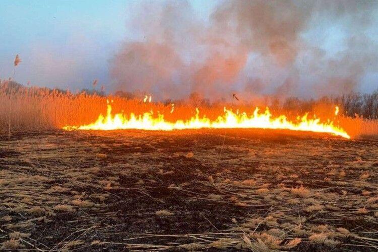 На Горохівщині знову підпалили сухостій