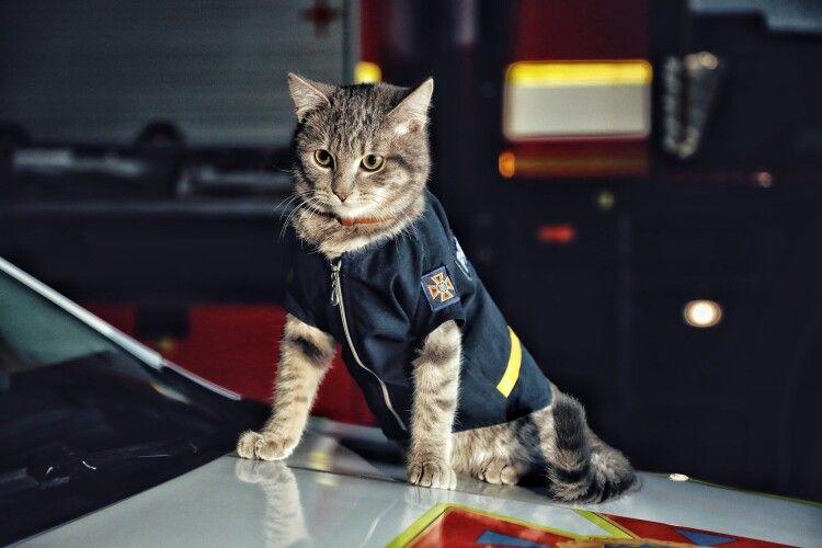 У Києві кіт Чівас став майором ДСНС України (Фото)