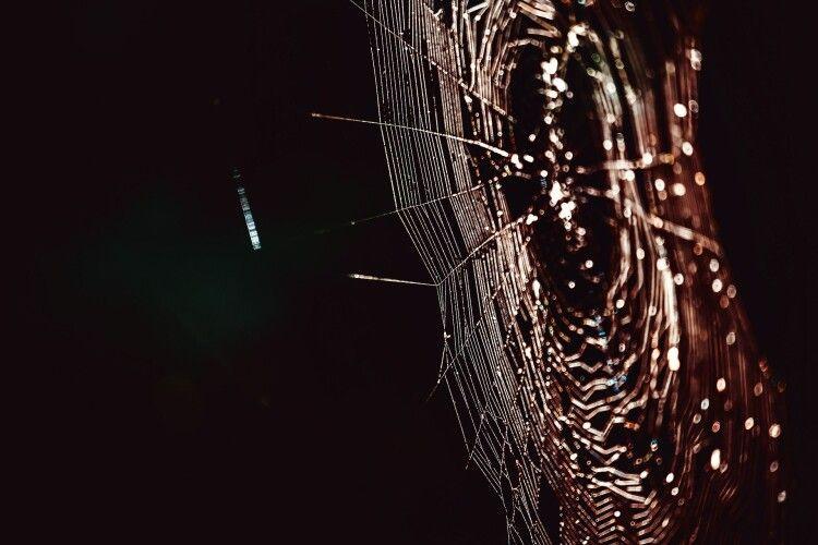 Чоловіка вкусив павук, отрута якого в15разів сильніша, ніж угримучої змії