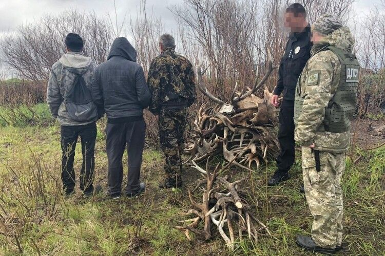 Збирали роги у зоні відчуження ЧАЕС (Фото, відео)