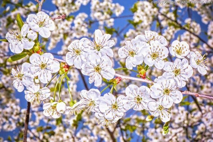 «Пізня весна двадцять першого...»: вражаючі світлини луцького фотографа