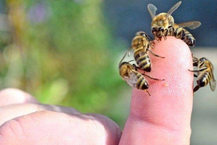 На Рівненщині бджоли до смерті покусали 61-річного пасічника