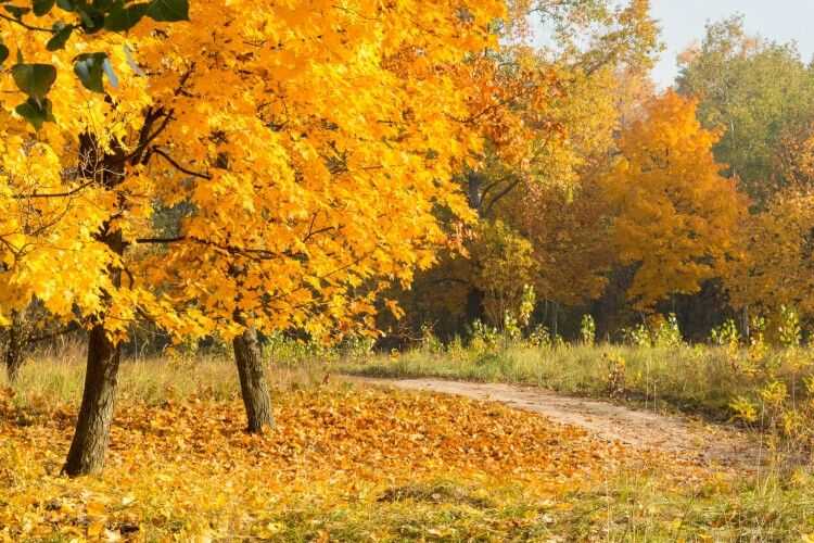 Погода на вівторок, 10 листопада: на Параскеви П'ятниці головними синоптиками будуть комарі