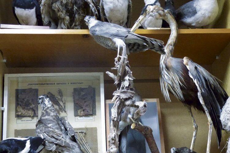 Опудала птахів виготовили у Шацькому лісовому коледжі.