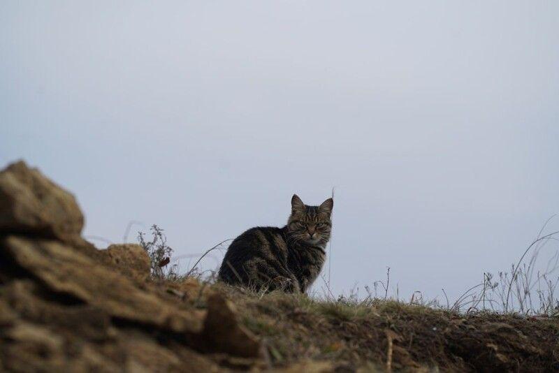 Коти і собаки – невід'ємна складова будь-якої позиції
