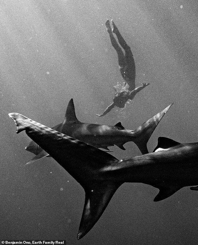 «Я відчувала повну безтурботність. Плавання з акулами – один з найбільш мирних досвідів у моєму житті».