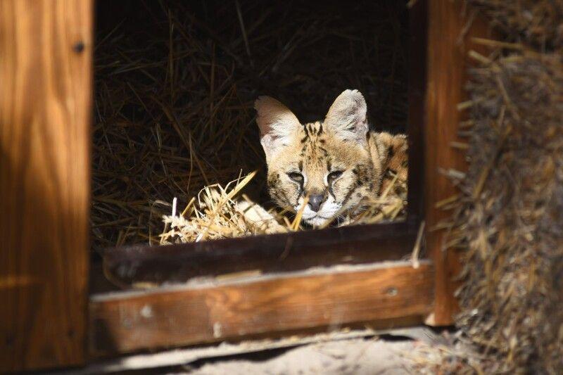 Кішки у Луцьку прижилися!