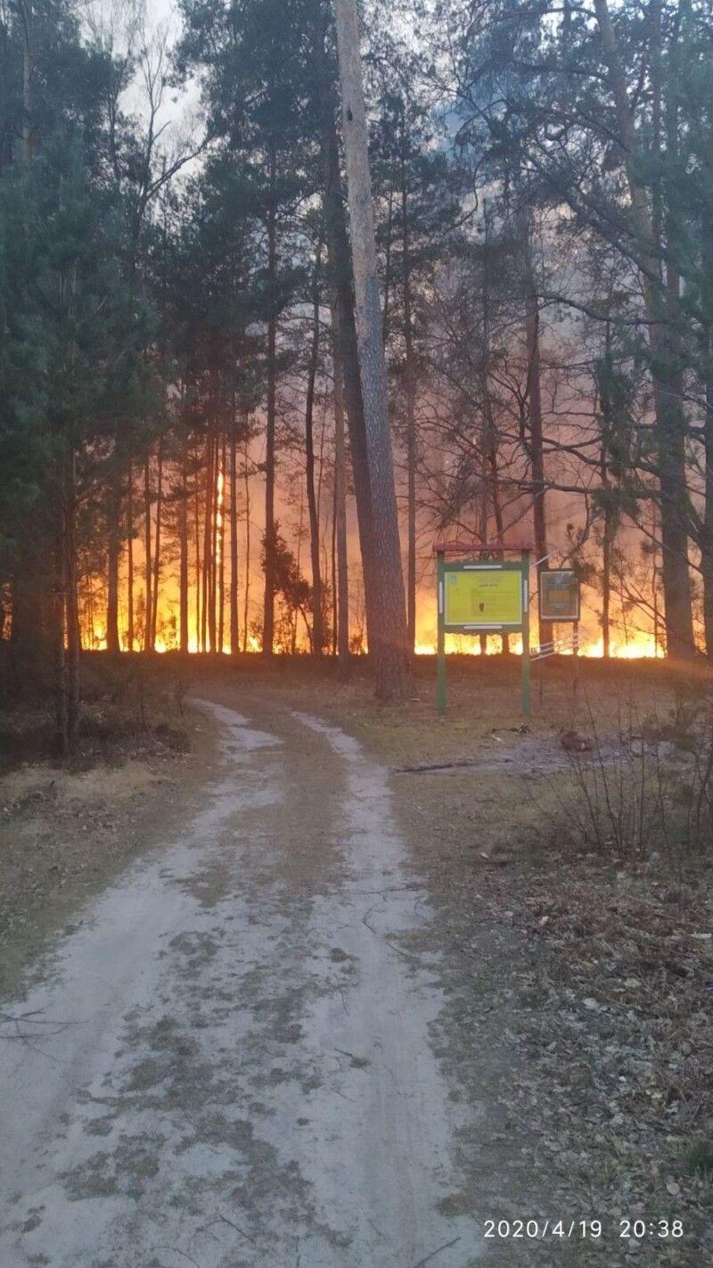 Місцеві жителі припускають, що підпали хтось робить зумисне.