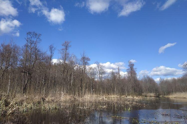 Природа на Любешівщині чудова.