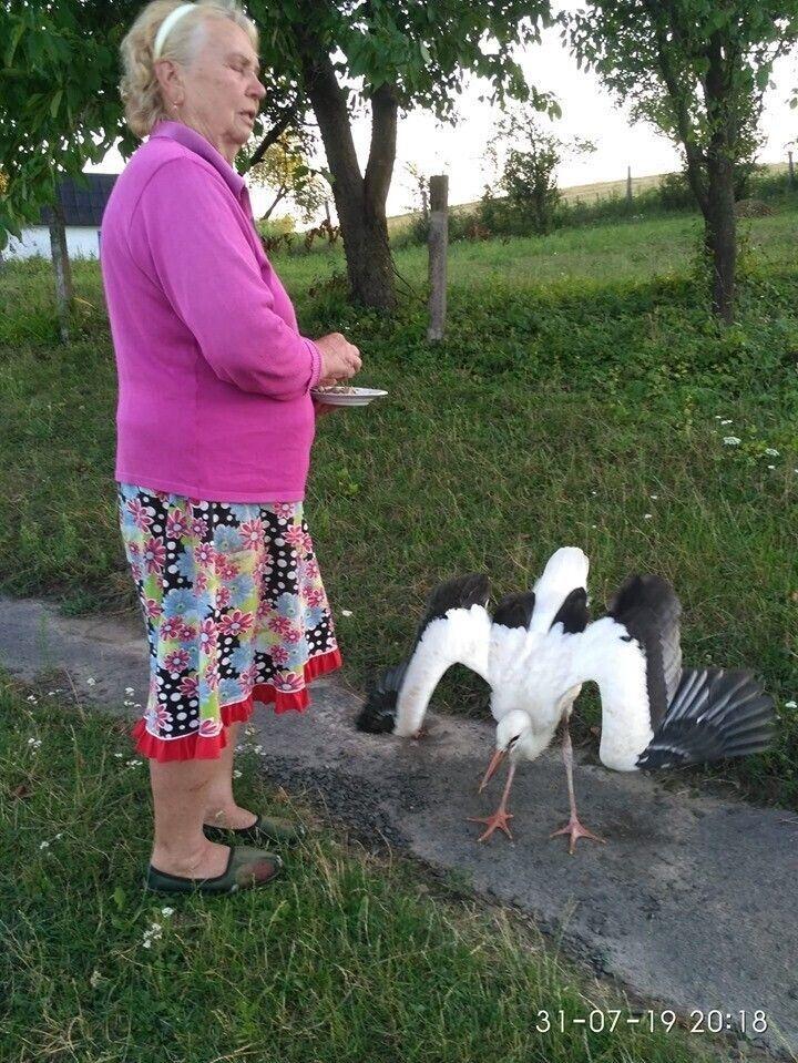 Селяни намагались підгодовувати птахів.