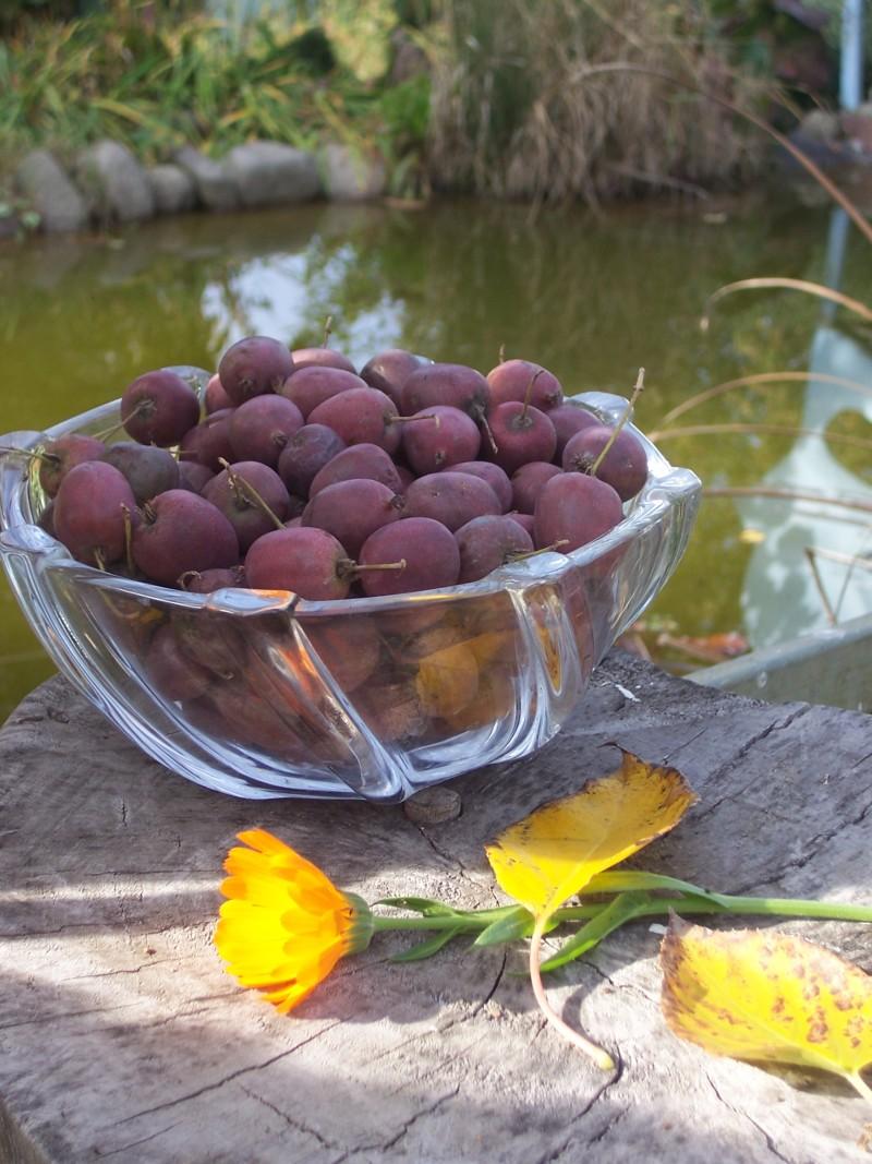 Протягом місяця актинідія радує господарів свіжими ягодами.