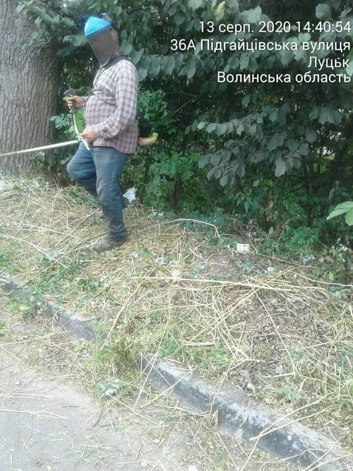 На вулиці Підгайцівській зарослі борщівника ліквідували.