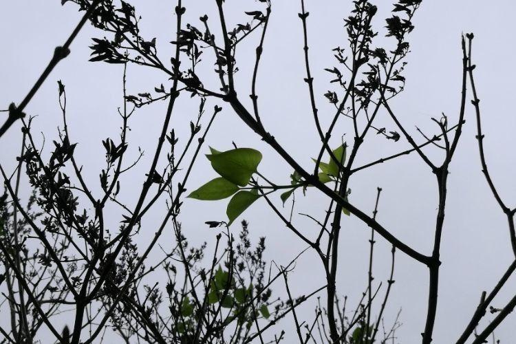 Уже й лисочків неагато, а цвіт є.