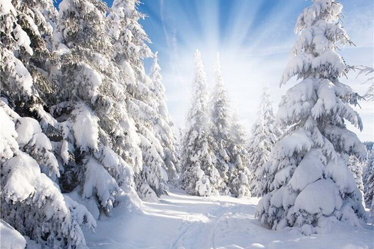 «Дерева аж по вуха у снігу».
