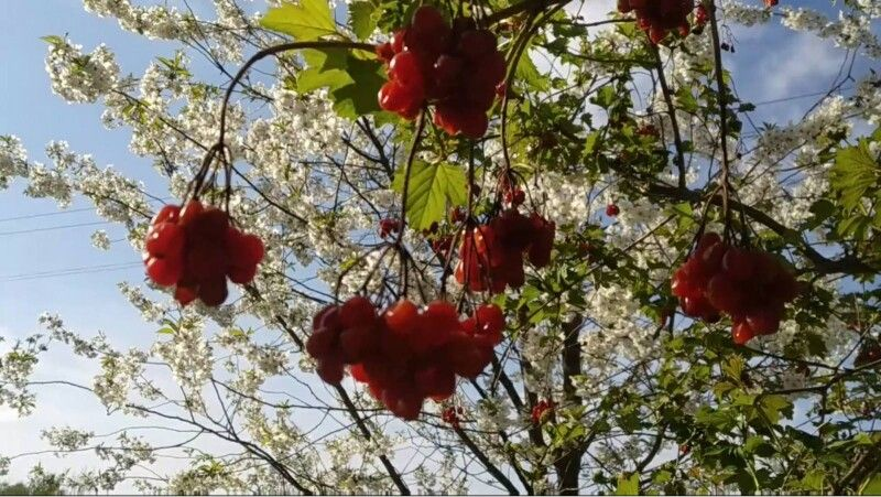 Отакої: у гості до Весни завітала Осінь!