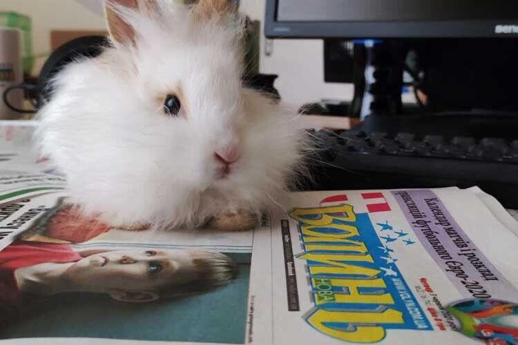 Покищо він зветься Кролик.