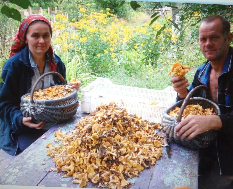 Серед природи живе подружжя і любить її над усе: кращого грибника, як глава сімейства, на Любешівщині ще треба пошукати.