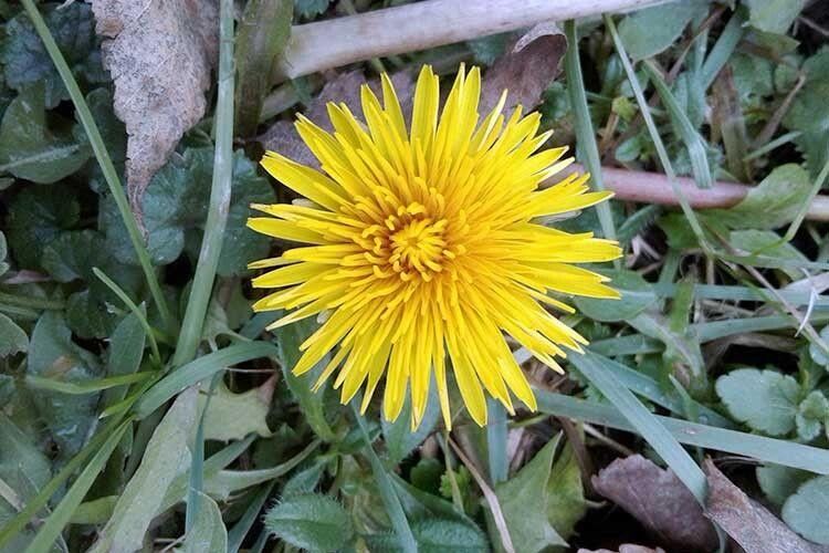 Рослини реагують натеплу погоду йдарують людям радість.