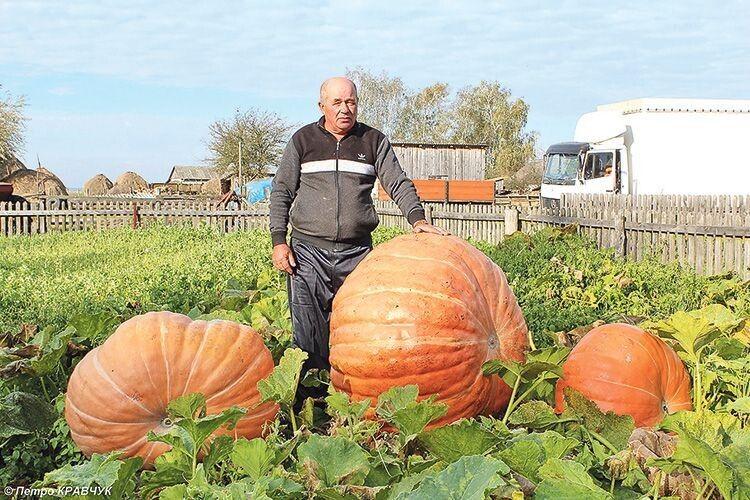 Ось такі велетні виросли на городі Григорія Абрамовича у селі Люб'язь Любешівського району.