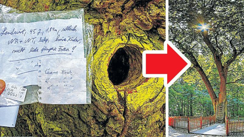 Легендарне дерево отримує щодня кілька листів.