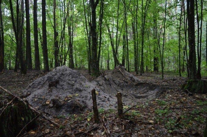 Крадії перекопали лісову дорогу, щоб ускладнити пересування лісівникам.