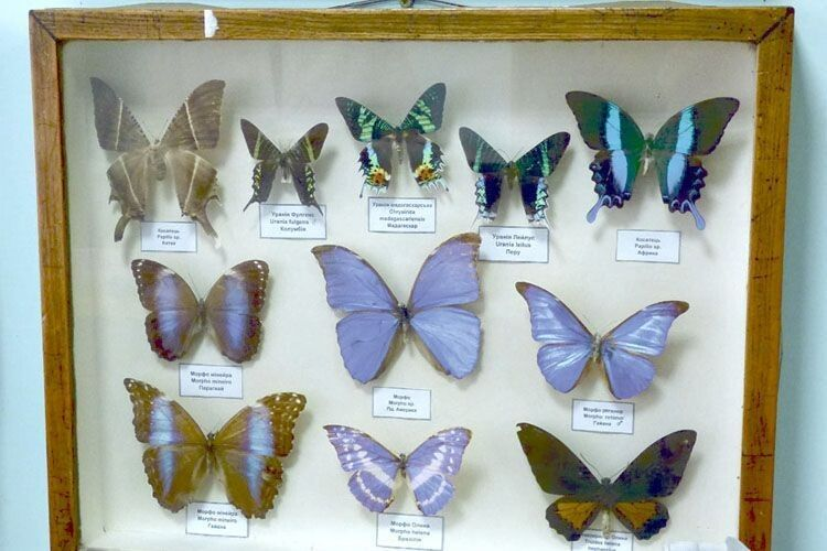 Колекцію екзотичних африканських метеликів дивовижної краси передали на біофак мореплавці.