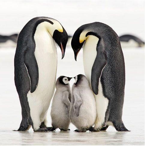 Коли ти маєш сім'ю, утебе є все.