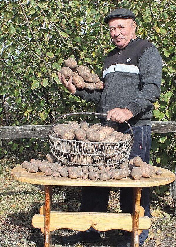 Понад 25 кілограмів — такий урожай з однієї картоплини мав Григорій Абрамович із села Люб'язь Любешівського району.