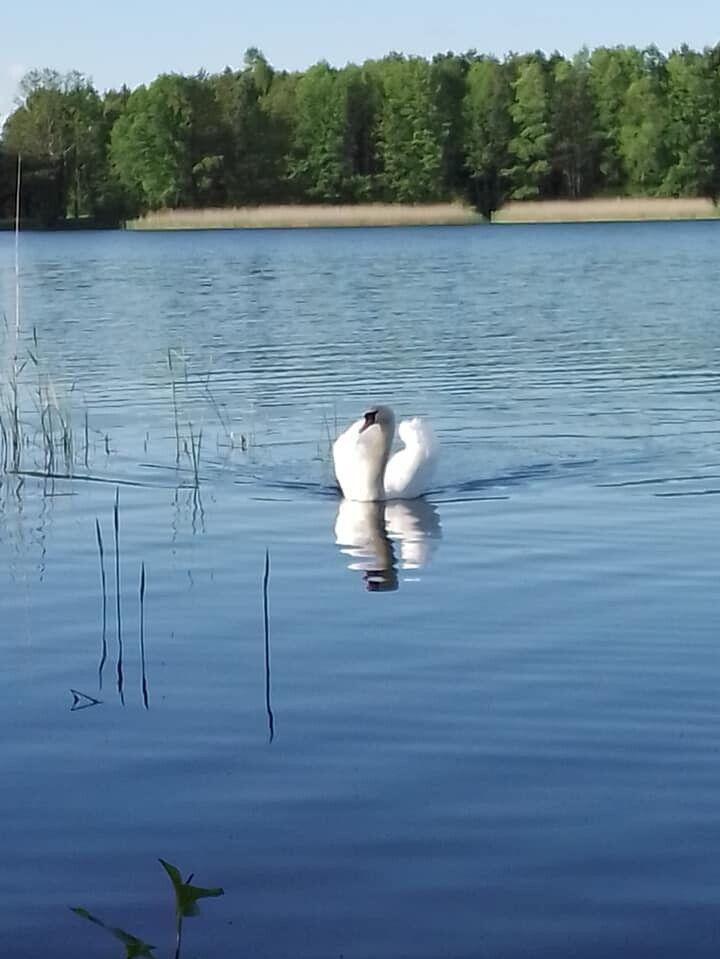 Озеро Луки, Старовижівщина.