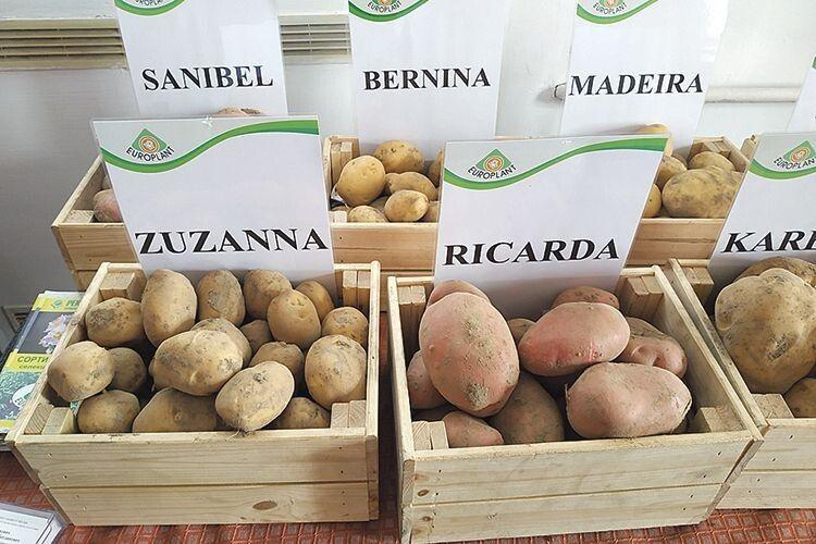 Кожен виробник може вибрати собі насіння сорту, який йому довподоби.