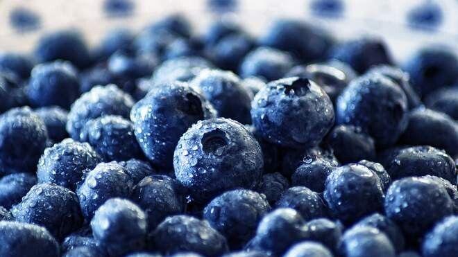 Садова лохина – найдорожча ягода у світі.