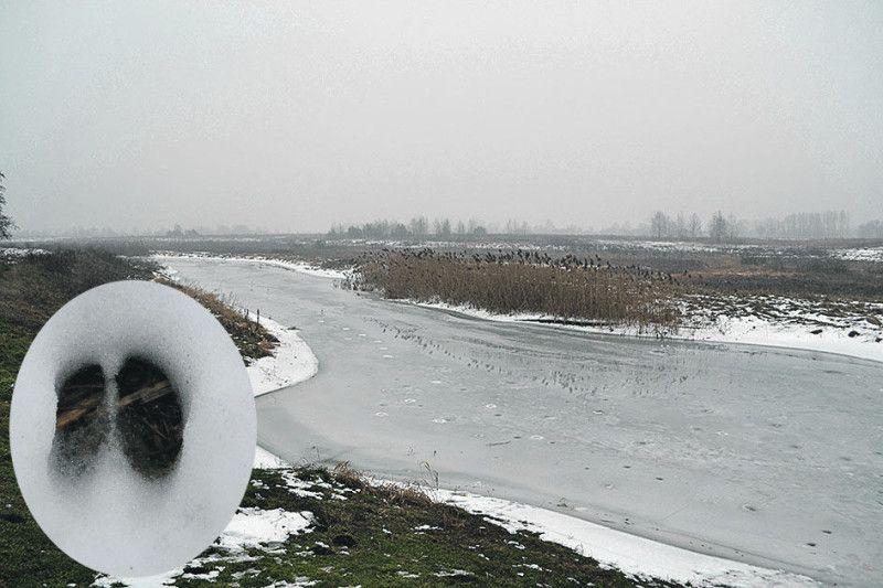 За день вдалося побачити сліди диких кіз і полюбуватися  замерзлою річкою Стохід.