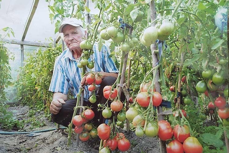 Сергій Свіржевський може похвалитися своїми помідорами.
