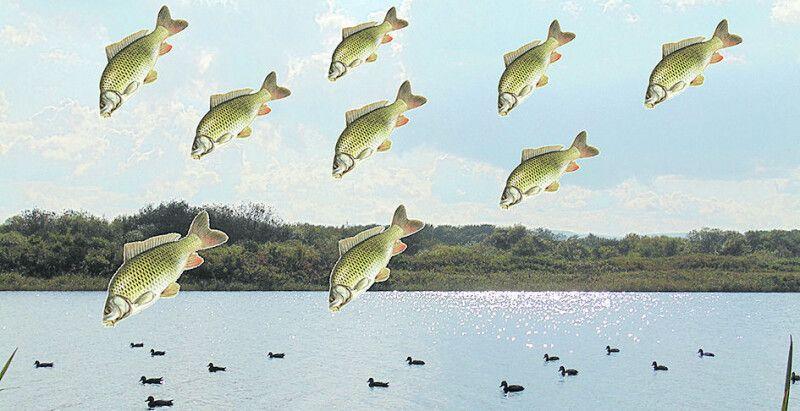 Кожен рибалка мріє про цю картину. Але потрапити у таку зливу,  що змітає за собою все, не хоче ніхто...