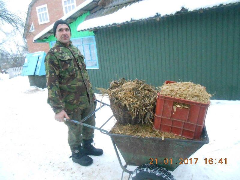 На зиму для такого поголів'я потрібно заготувати чимало кормів.