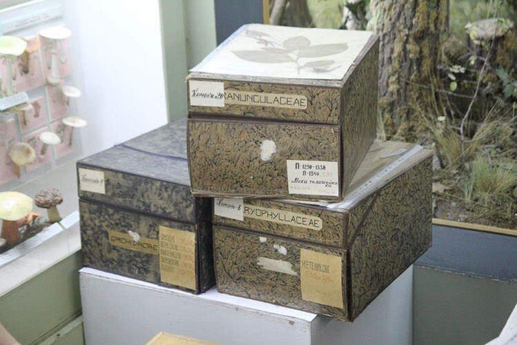 Гербарій Мацка складається з 3385 гербарних зразків.