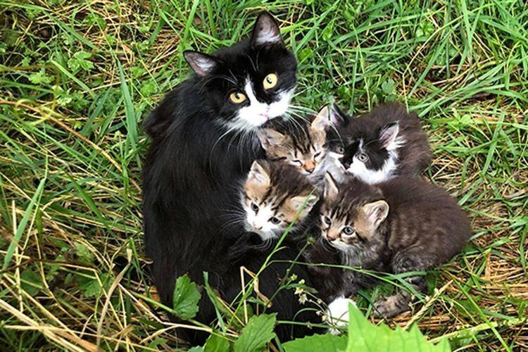 Усім кошенятам уже знайшли господарів.