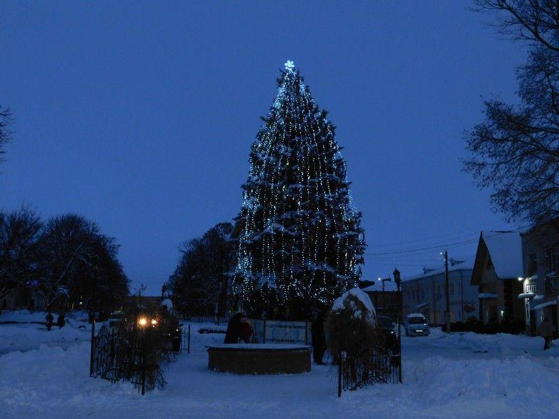 Пухнаста красуня сяє новорічними вогнями у Горохові.
