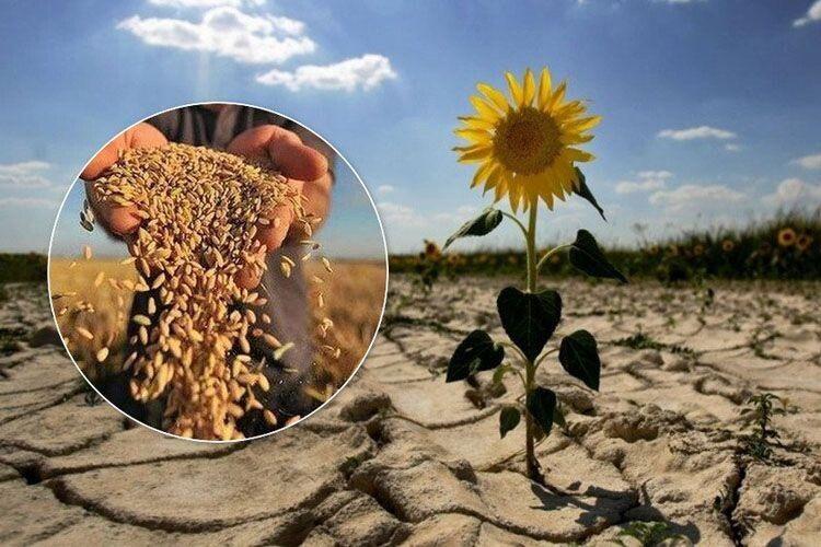А, може, дощі в останні дні таки врятують ситуацію  і Україна зазеленіє?