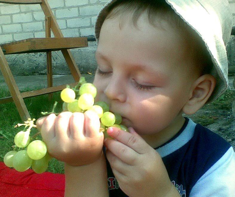 Онук Данилко смакує бабусиним урожаєм.
